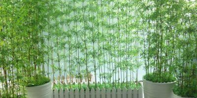 Trúc quân tử trang trí sân vườn